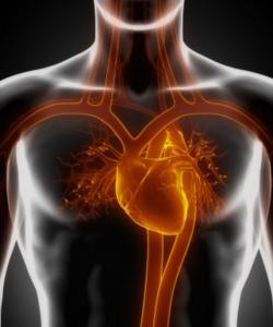 Circulatorio Fisioterapia Xirivella